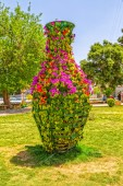 Shiraz flowers in the park — Stock Photo
