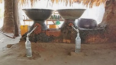 Production of palm brandy — Stockvideo
