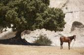 Landscape with horse and tree in Crete. Greece — Stock Photo
