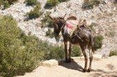 Traditional greek donkey. Rural mode of transportation. Crete. G — Stock Photo