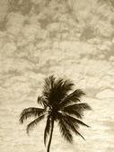 Palm tree in sepia tone. Brazil — Foto Stock