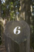 Forest and cut trunk with number six in a pathway. — Stock Photo