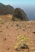 Gomera landscape with rocks and plants. Canary Islands — Stock Photo