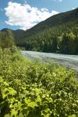 Landscape with river and forest in British Columbia. Canada — Stockfoto