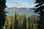 Landscape with forest in British Columbia. Mount Revelstoke. Can — Stock Photo