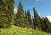 Landscape with forest in British Columbia. Mount Revelstoke. Can — Foto de Stock