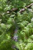 Fern and forest vegetation in British Columbia. Canada — Stockfoto
