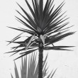Yucca plant over a white wall with shadow. Spain — Stock Photo #65855979