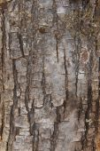 Pine tree bark detail in vertical format — Stock Photo