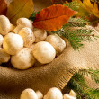 Champignon with autumn leaves and spruce branches — Stock Photo #59002837