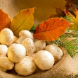 Champignon with autumn leaves and spruce branches — Stock Photo #59002843