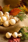Champignon with autumn leaves and spruce branches — Stock Photo