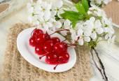 Canned cherries, twig of cherry tree and openwork napkin. — Stock Photo