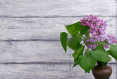 Lilac on background of wooden planks in rustic style — Stock Photo