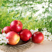 Still life with apples and twig of apple tree — Stock Photo