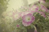 Vintage picture Spring pink flowers color  — Photo