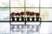 Plant in office building — Stock Photo