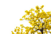 Yellow flowers isolated background — 图库照片