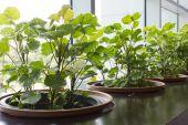 Garden In building — Stock Photo
