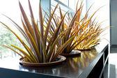 Plante de jardin vert — Photo