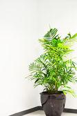 Palmiye ağaçları tencere ile office koridor — Stok fotoğraf
