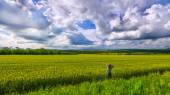 Alone girl viewing in wheat field with clouds stormy skies — Stock Photo
