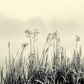 Cane silhouette on fog - minimalism concept in black and white — Stock Photo