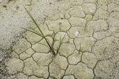 Zelených rostlin z popraskané země. — Stock fotografie