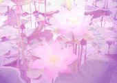 Beautiful lotus with color filters — Foto de Stock