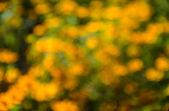Natural yellow bokeh background — Foto de Stock