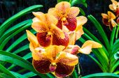 Colourful orchid flowers on bright summer day — Foto de Stock