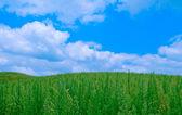 Yosunlu çim alan bulutlu mavi gökyüzü altında — Stok fotoğraf