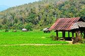 Cottage at Countryside Garden of Thailand — Stok fotoğraf