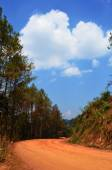 Non-Asphalt Paved Road with Pine Forest — Stock Photo