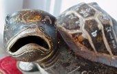 Rock Turtle — Stock Photo