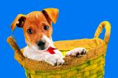 Here I live in a basket — Stock Photo