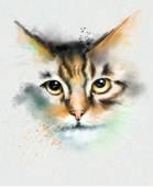 Tierische Collection: Katze — Stockfoto