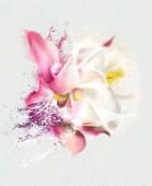 Watercolor pink rose — Stock Photo