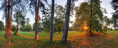 Panoramic view of forest, 360 degree — Stock Photo