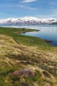 Iceland landspace with fjord and mountain — Stock Photo