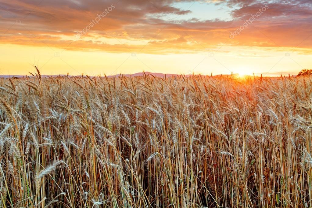 Золотой поле с рисунками