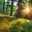 The bright sun rays shining through branches of trees, wood land — Stock Photo #78863788