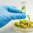 ������, ������: Workplace on laboratory for biotecnology test Scientist holding samples of plants