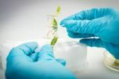 Pracy w laboratorium do badania biotecnology. Naukowiec gospodarstwa próbki roślin — Zdjęcie stockowe