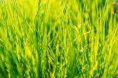 Environment concept,  the green  grass — Stock Photo