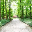 Path leading through forest — Stock Photo #57787871