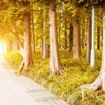 Path leading through autumn forest — Stock Photo #57819075