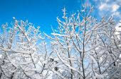 Snowy forest in December — Stock Photo