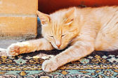 Lazy red cat is sleeping stretched his legs — Stock Photo