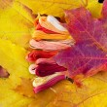 Colors of autumn, multicolor yarns looks like autumn leaves — Stock Photo #64815751